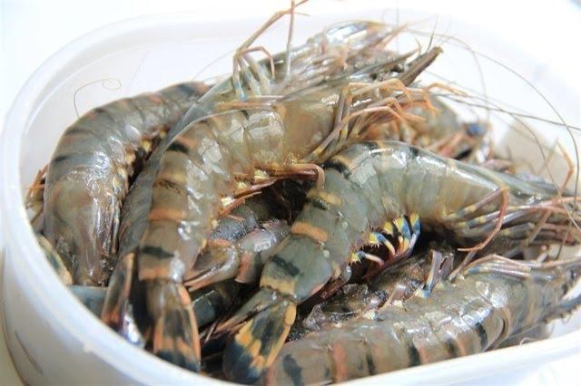 Taste of Vietnam: Tìm kiếm đầu bếp tài năng đưa tôm Bạc Liêu tỏa sáng trên bàn tiệc - 2